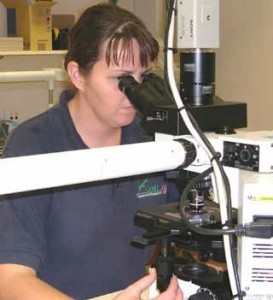 Figure 6: Captain Alyson Auliff  examining  malaria blood films.